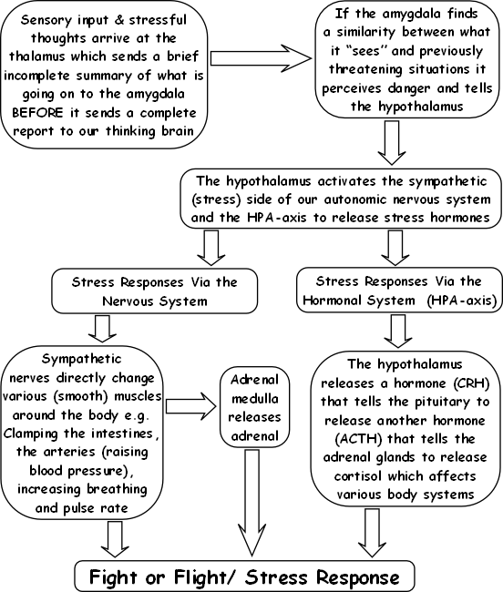 Adrenal exhaustion HPA axis treatment