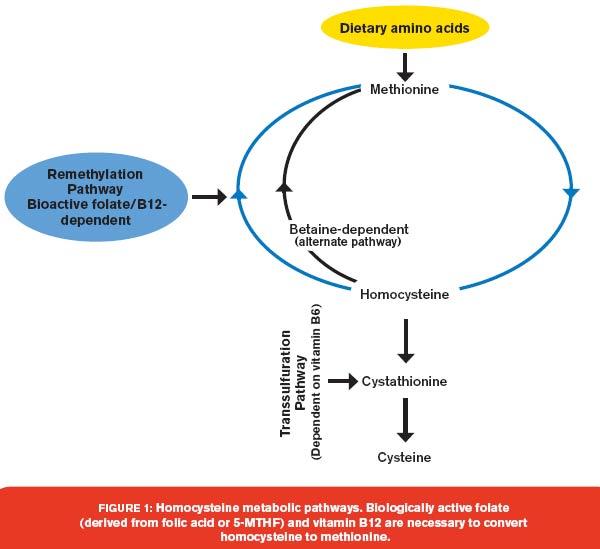 TMG methylation supplements