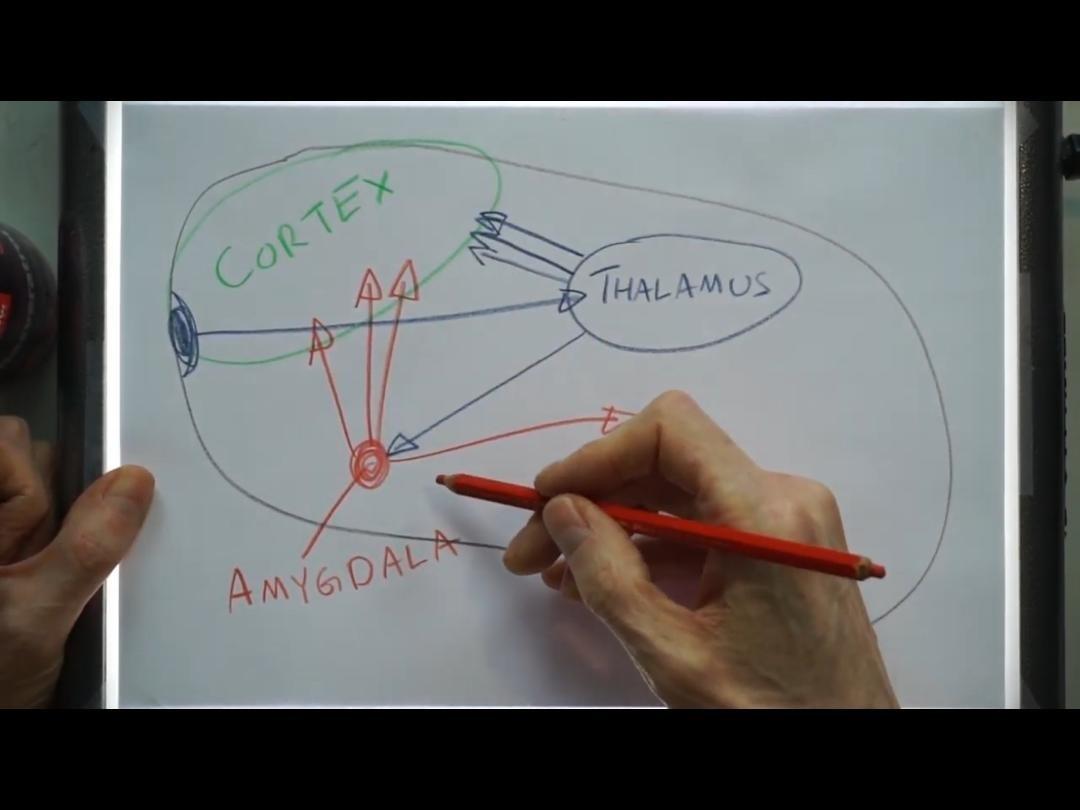 Amygdala Based Anxiety Treatment