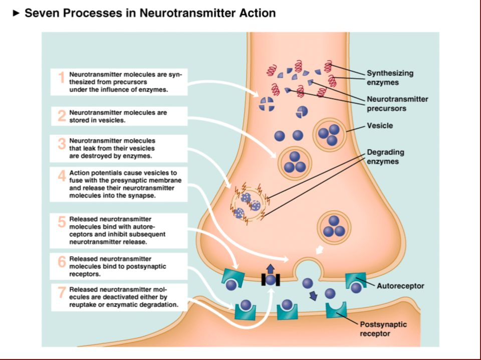 Neurotransmitter tests a waste of money